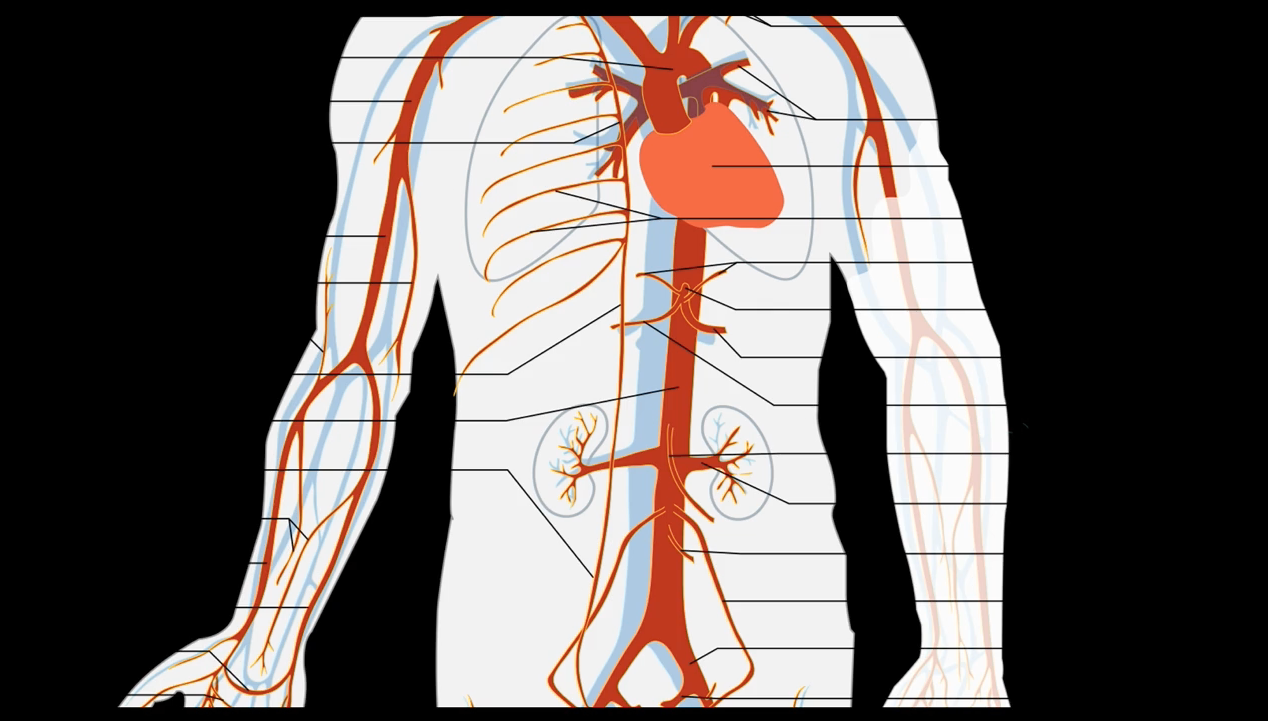 Chop wood, carry water, and scan the Aorta. Do the basics and save lives! #FOAMED